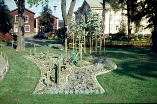 skelleftea-stadsparkens-kaktusplantering-1964